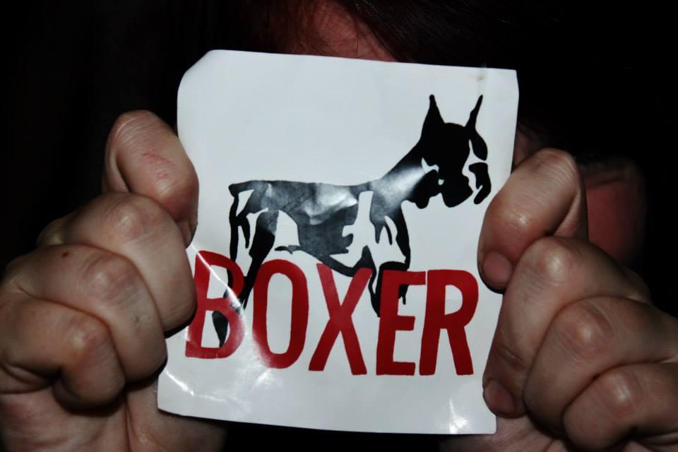 boxer3